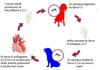 http://3.bp.blogspot.com/-pjh-hvs35d8/TrsKoPX25iI/AAAAAAAAAFQ/8E4J1pGM6OA/s1600/heartworm-prevention-cycle.jpg